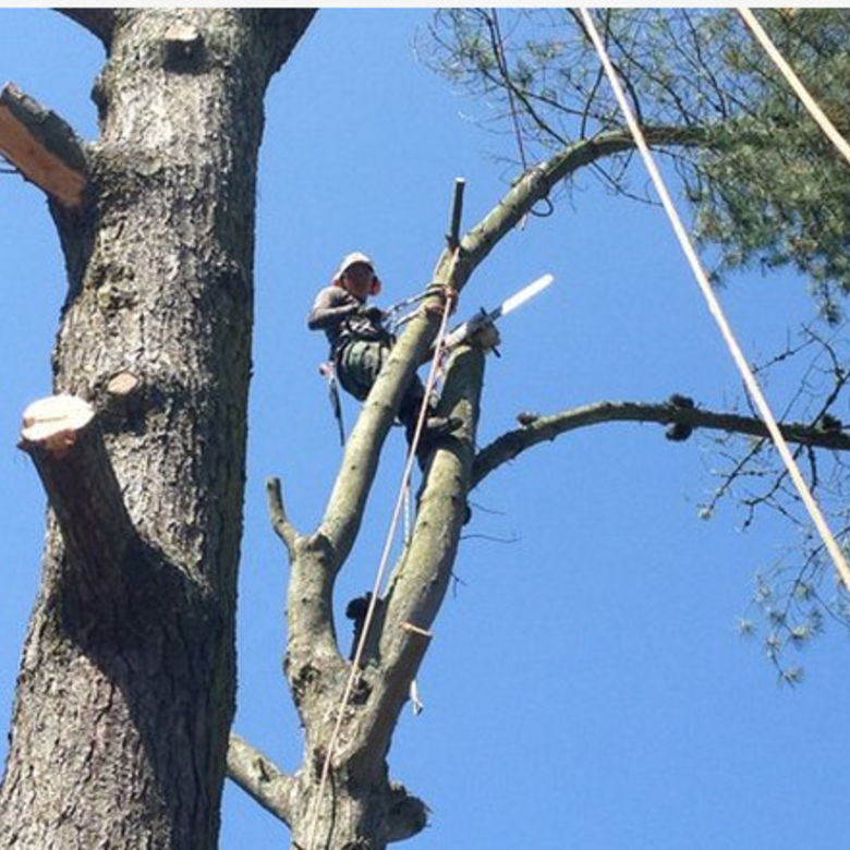 The Best Tree Surgeon Services In Miami County Kansas Get A Free Quote When You Fill Out Form Below